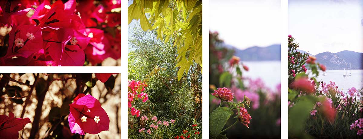 jardin fleur été corse ajaccio golfe de lava location villa maison